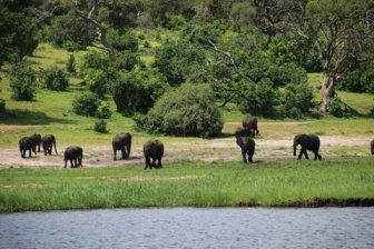 Chobe wildlife park