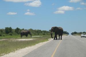 "Overstekend ""wild"" highway Kasane - Francistown"